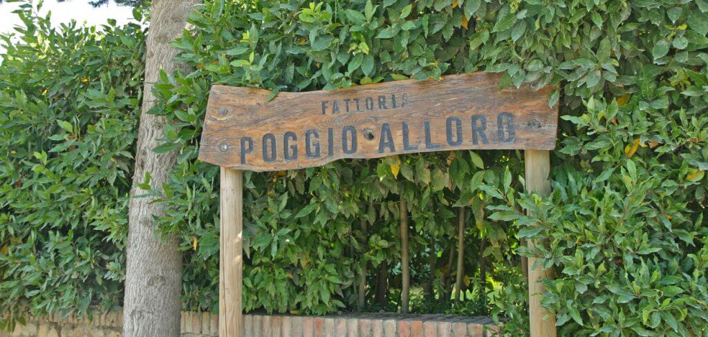 Vinícola Fattoria Poggio Alloro em San Gimignano