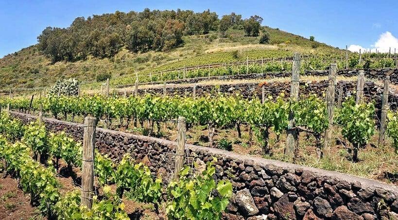 Vinícola Benanti Winery em Sicília