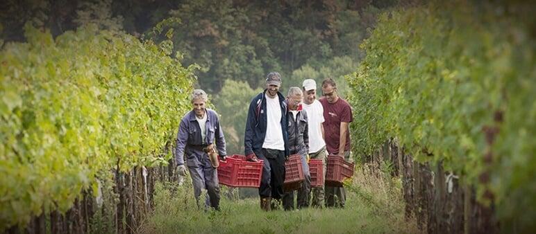Pessoas trabalhando na vinícola Avignonesi
