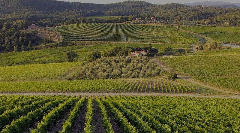 Plantação da Azienda Agricola Le Gode em Montalcino