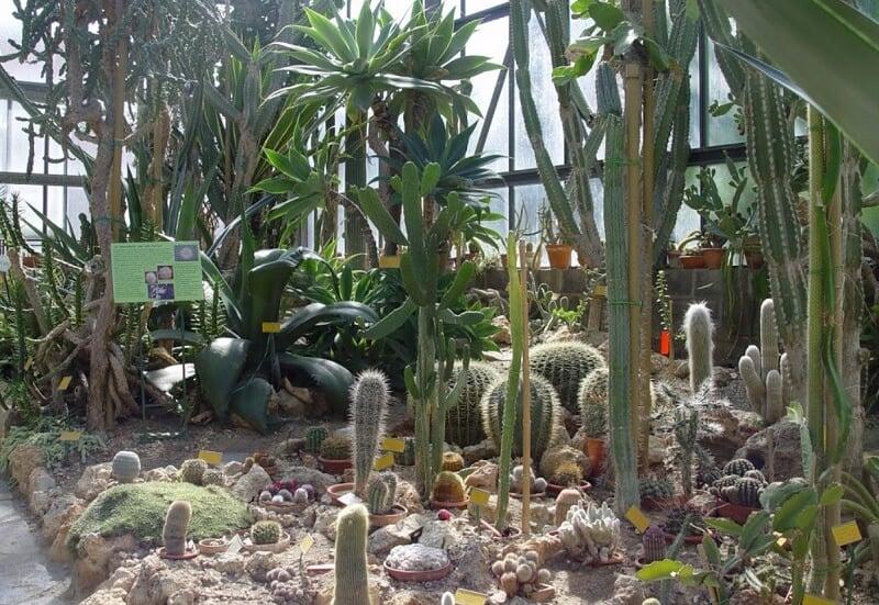 Coleção de cactus do Orto Botânico dell'Universitá di Siena