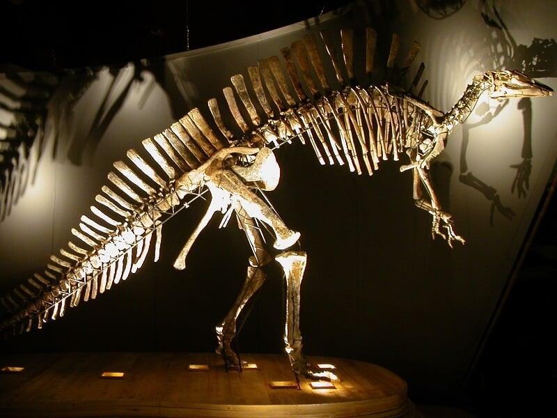 Esqueleto de dinossauro exposto no Museu de História Nacional de Veneza