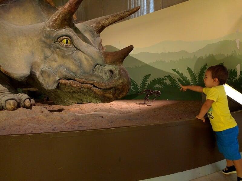 Criança no Museu de História Natural