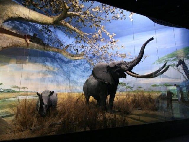 Museu Cívico de História Natural de Milão