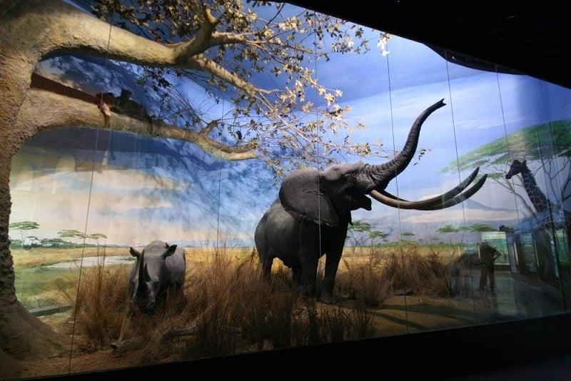 Museu de História Natual em Florença